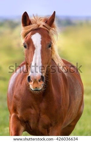 Beautiful red horse with long mane portrait in motion - stock photo