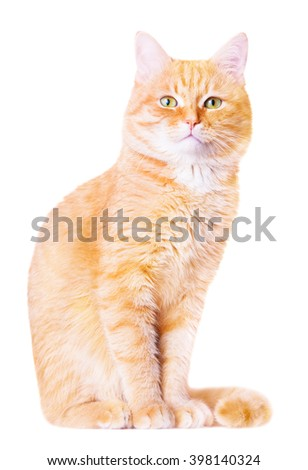 Beautiful red house cat on a white background - stock photo