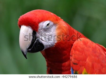 Beautiful Red Macaw