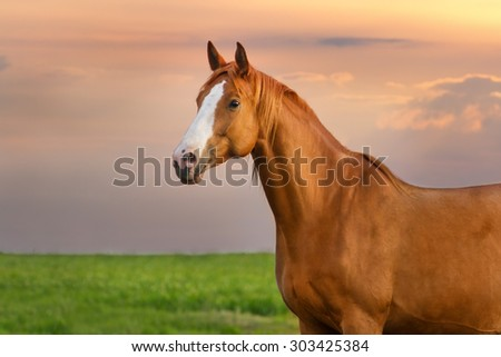 Beautiful red mare on green pasture against sunset sky - stock photo