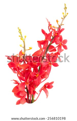 beautiful red orchid isolated on white - stock photo