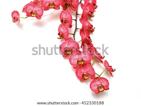 Beautiful red orchid on white, top view, flat composition - stock photo