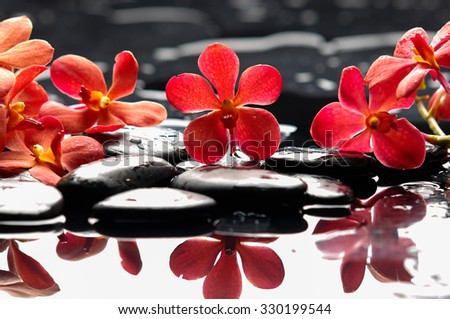 Beautiful red orchid with therapy stones  - stock photo