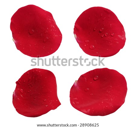 beautiful red rose flower petals, isolated on white background, ideal for natural,health or season designs.