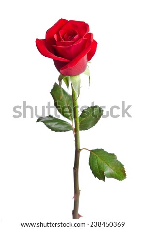 Beautiful Red Rose Isolated On White Stock Photo (Royalty ...  Beautiful Red R...