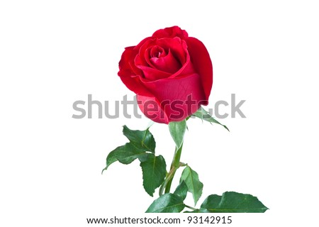 beautiful red rose isolated on white background,with clipping path