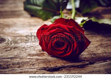 Beautiful red rose on wooden background - stock photo