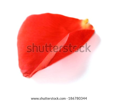Beautiful red rose petal, isolated on white