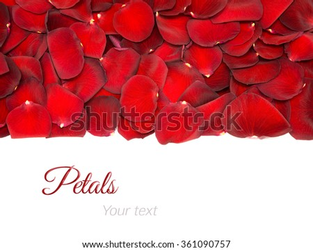 Beautiful red rose petals on a white background