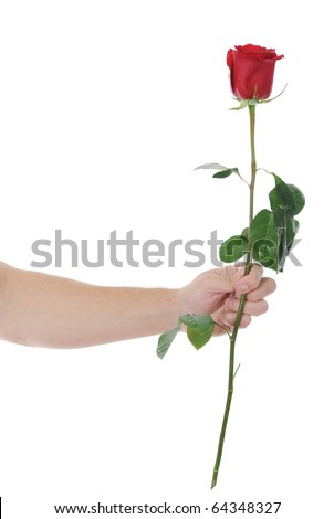 beautiful red rose with dew drops in the hand of man.  isolated on white background - stock photo