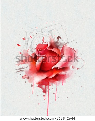 Beautiful red rose, with elements of the sketch, watercolor painting - stock photo