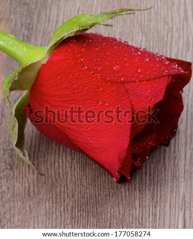 Beautiful Red Rose with Water Droplets closeup on Wooden background