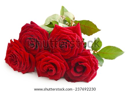 Beautiful red roses isolated on white
