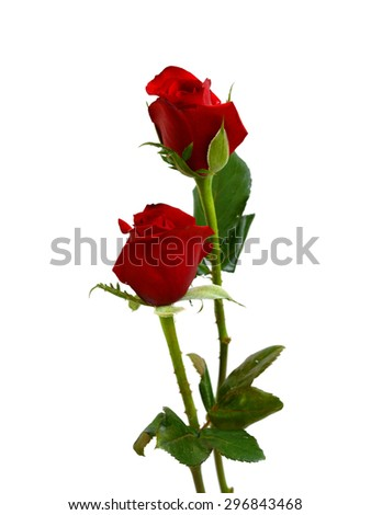 beautiful red roses isolated on white background - stock photo