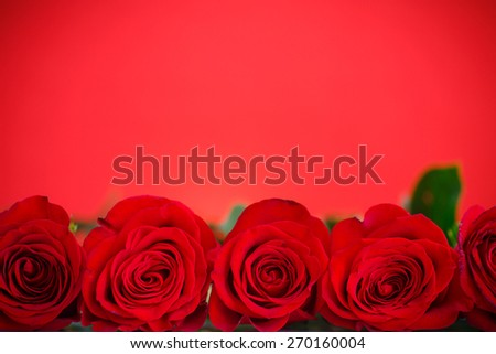 beautiful red roses on a red background - stock photo