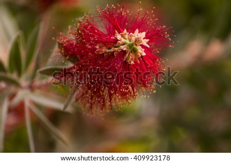 beautiful red succulent aloe plant flower with blue sky - stock photo