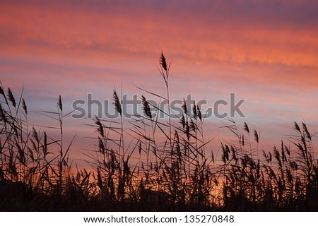 Beautiful red sunset sky in a field