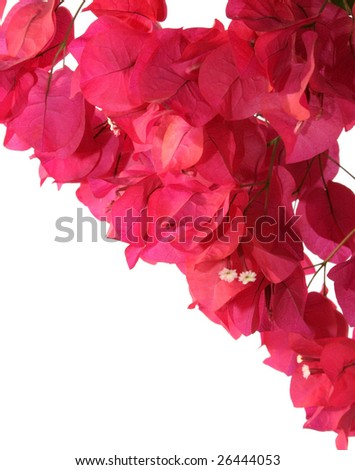 Beautiful red tropical flowers on white background.
