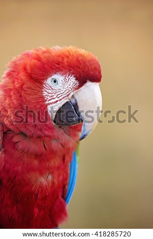 Beautiful red, white and blue parrot bird