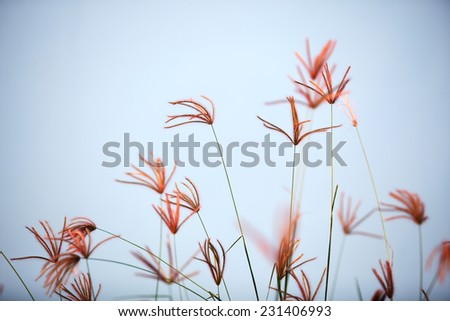 beautiful reeds grass
