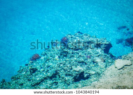 Beautiful reef fish on sea background