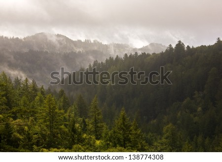 Beautiful remote evergreen forest bathed in misty fog after a passing storm - stock photo