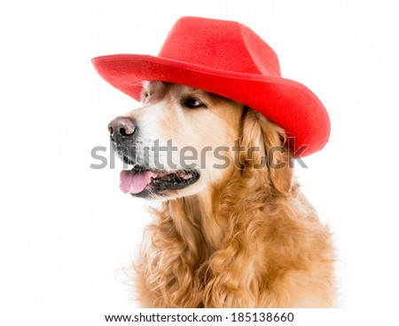Beautiful Retriever redhead in red cowboy hat isolated on white background - stock photo