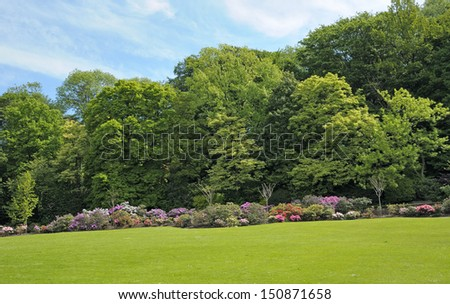Beautiful rhododendrons in parc in Brussels, Belgium - stock photo
