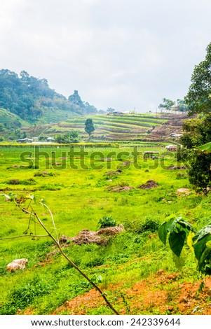 Beautiful Rice Field on Mountains, Thailand. - stock photo