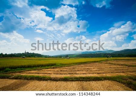 Beautiful rice fields ,Thailand - stock photo