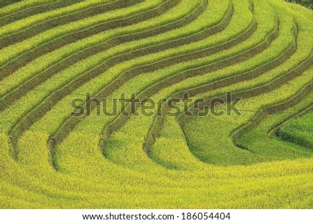 Beautiful Rice Terrace in Mu Cang Chai, Vietnam