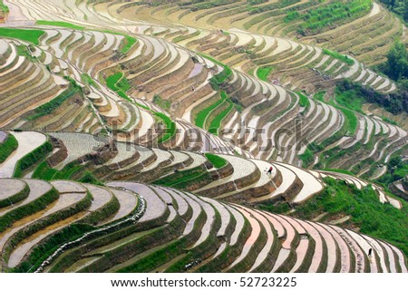 Beautiful rice terraces and some workers at sunset - stock photo