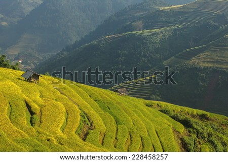 Beautiful Rice Terraces, South East Asia