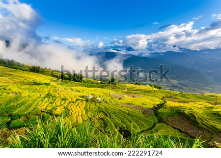 Beautiful ripen rice terraced fields with early morning mists flying above.  Location: Y Ty, Lao Cai province, Vietnam. - stock photo