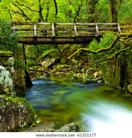 Beautiful river flowing by the forest during the Spring season - stock photo