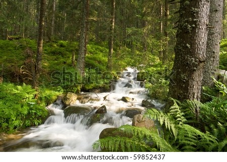 beautiful river in a forest