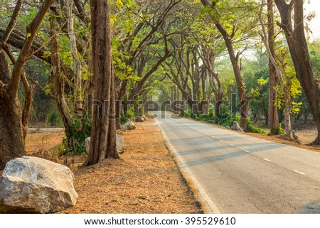 Beautiful road in deep green and yellow forest in wild - stock photo