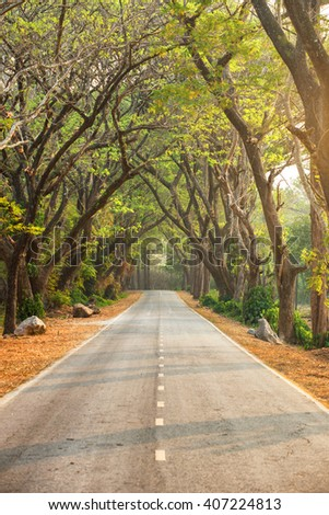 Beautiful road in deep green and yellow forest in wild