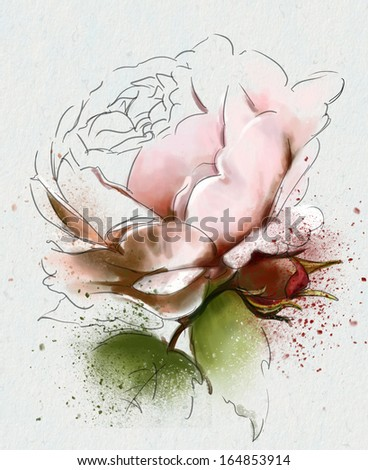 beautiful rose, collection - stock photo