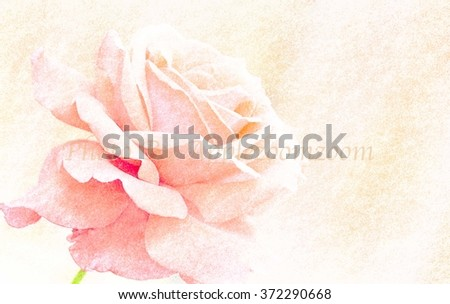 Beautiful Rose flower on sand stone texture filter background