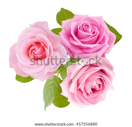 Beautiful rose flowers bunch isolated on white background