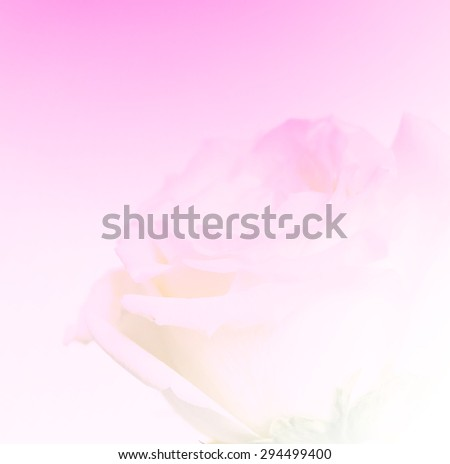 Beautiful rose flowers made with color filters, soft focus