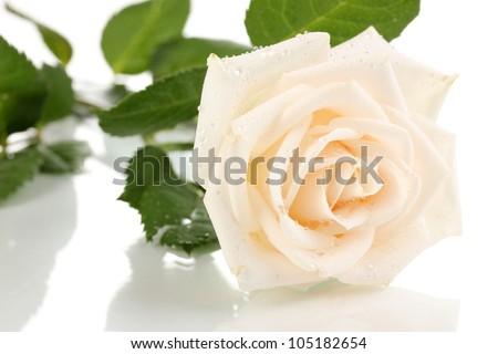 Beautiful rose isolated on white - stock photo