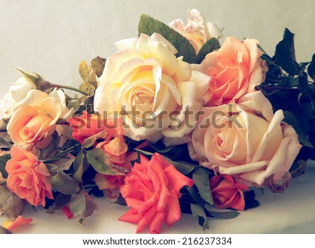 Beautiful Roses. In soft vintage styled - stock photo