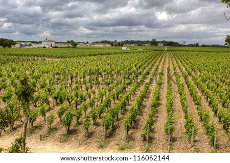 Beautiful rows of grapes before harvesting. France, Provence