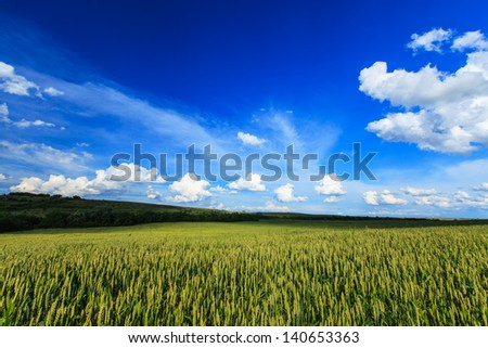 Beautiful rural countryside with crop fields, blue sky and sunlight