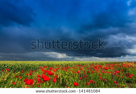 Beautiful rural fields under storm clouds and selective sunlight