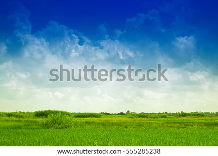 Beautiful rural landscape of Paddy field, blue sky , Howrah, West Bengal, India
