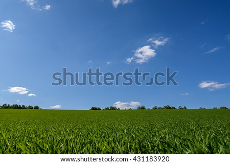 Beautiful rural landscape with bright green field of young oats against a blue sky with clouds - stock photo