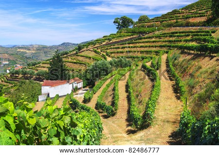 Beautiful rural landscape with bright green vine cultures in the Douro region, Portugal - stock photo